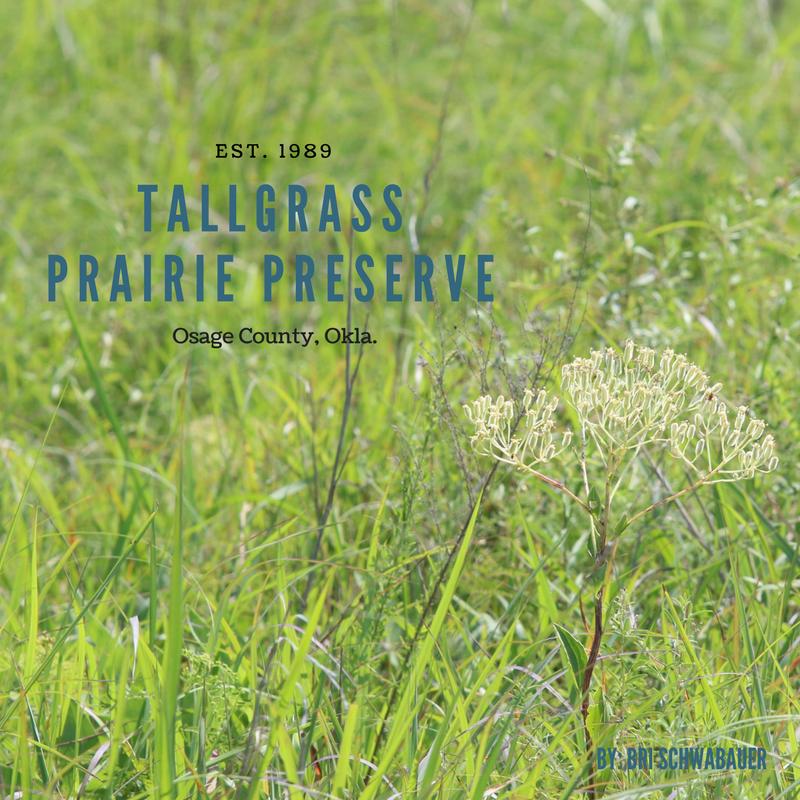 tall grass prairie preserve-3.png