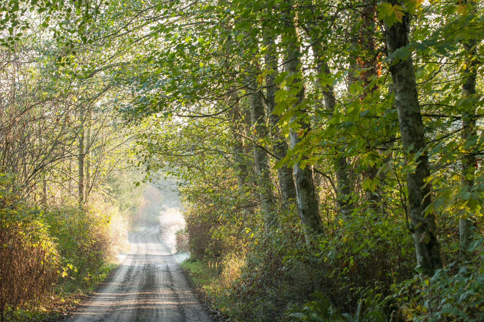 A peaceful country road...