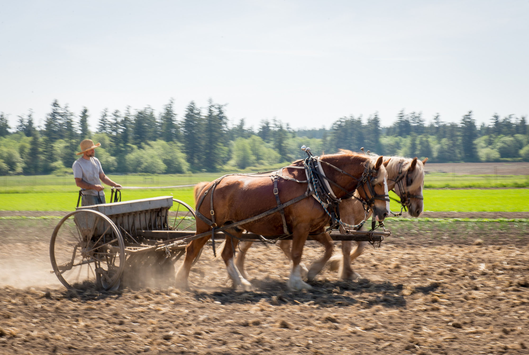 Farming - the old fashioned way