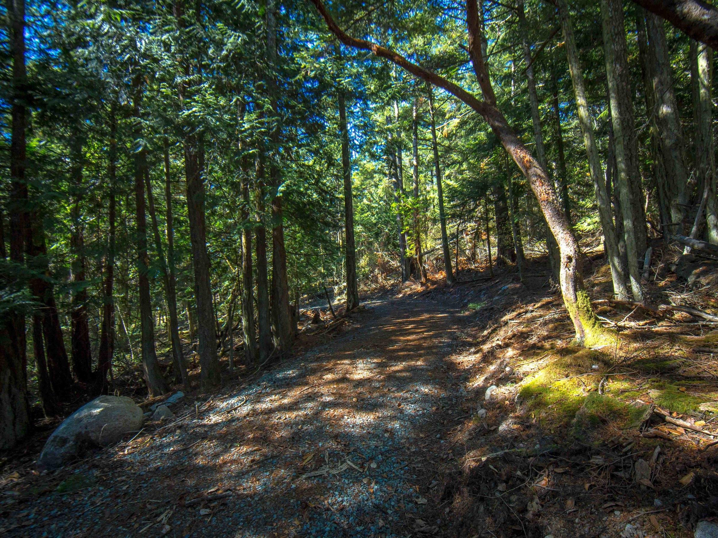 Beautiful woods as you approach...