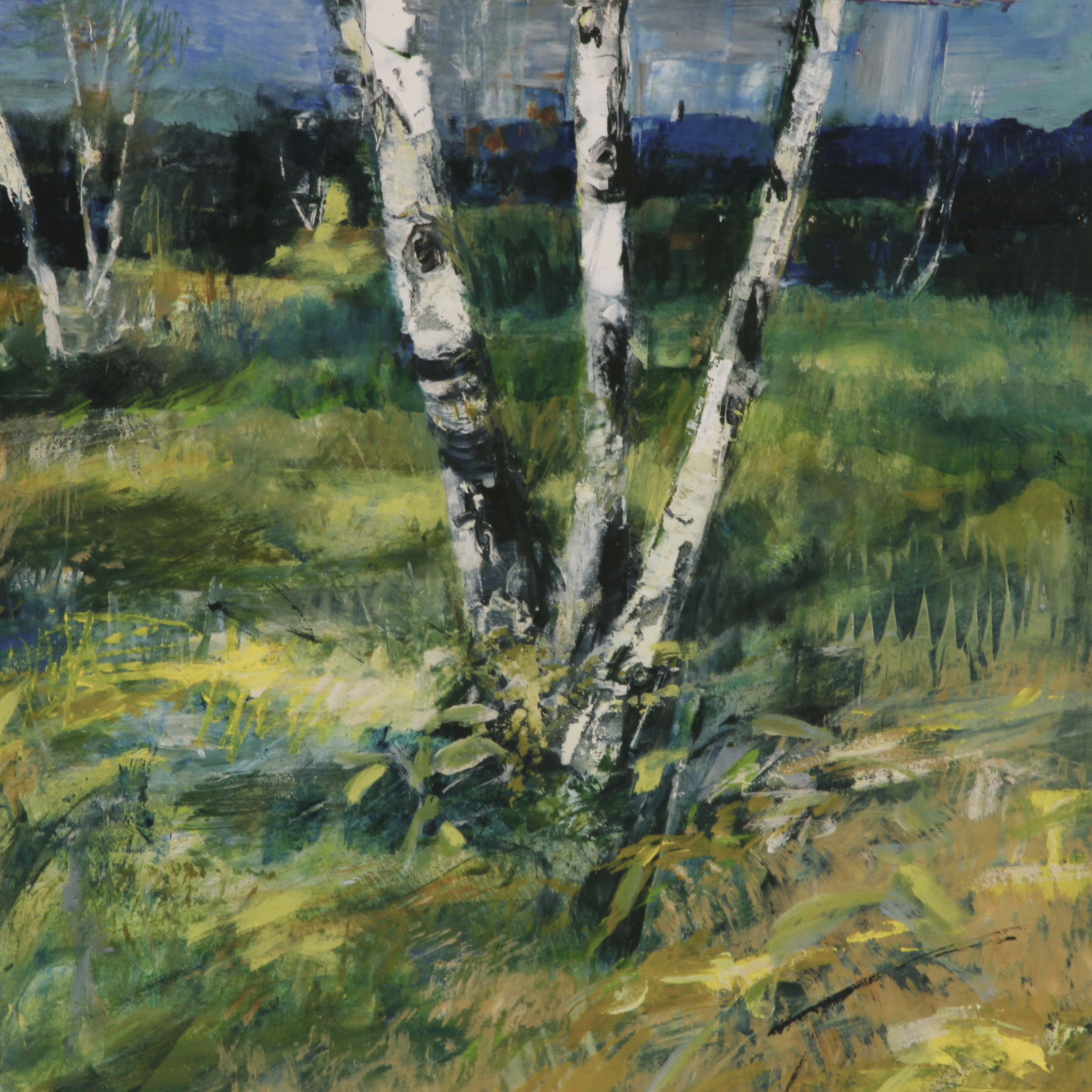 Birch and Meadow
