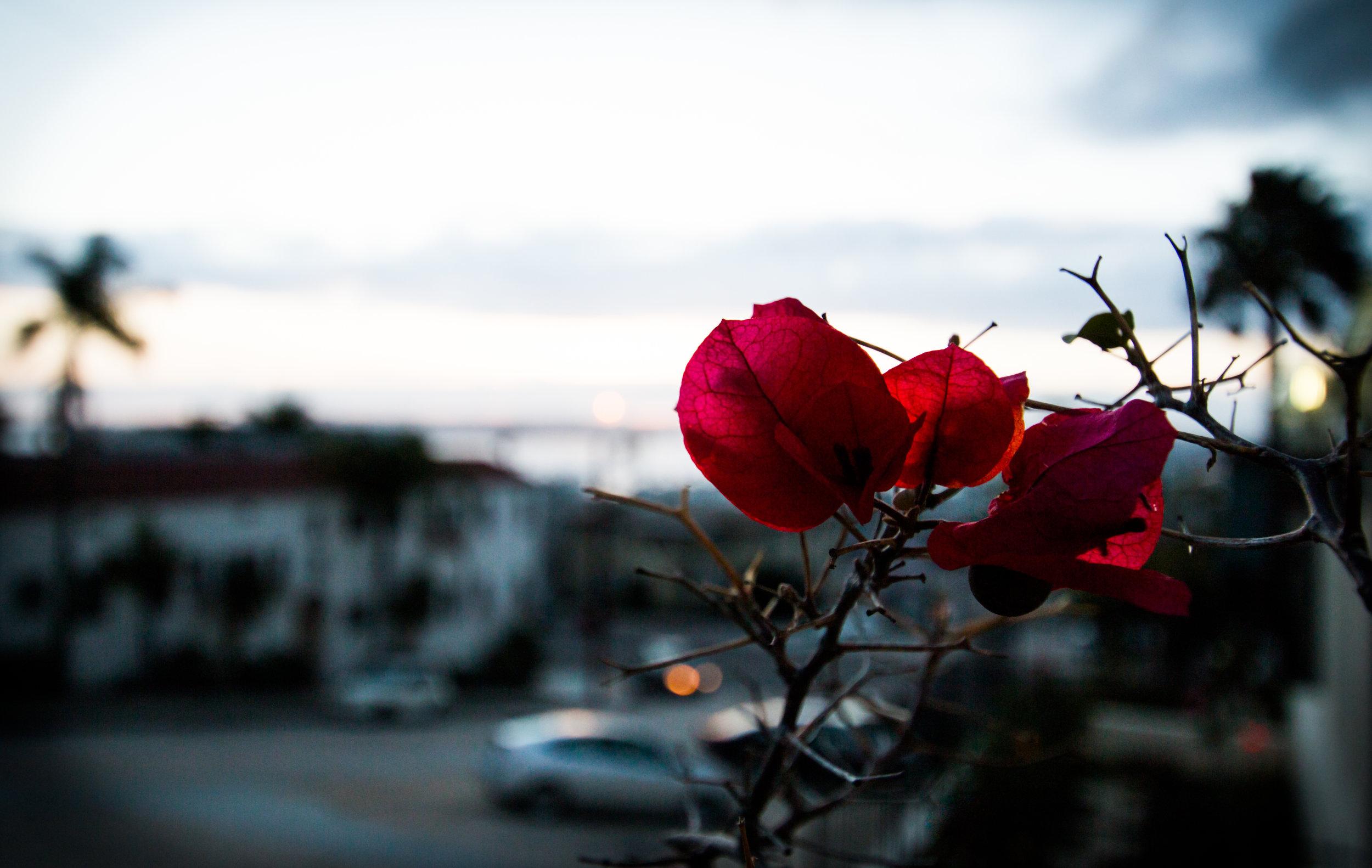 11_sunset_callie_mel_1612223.jpg