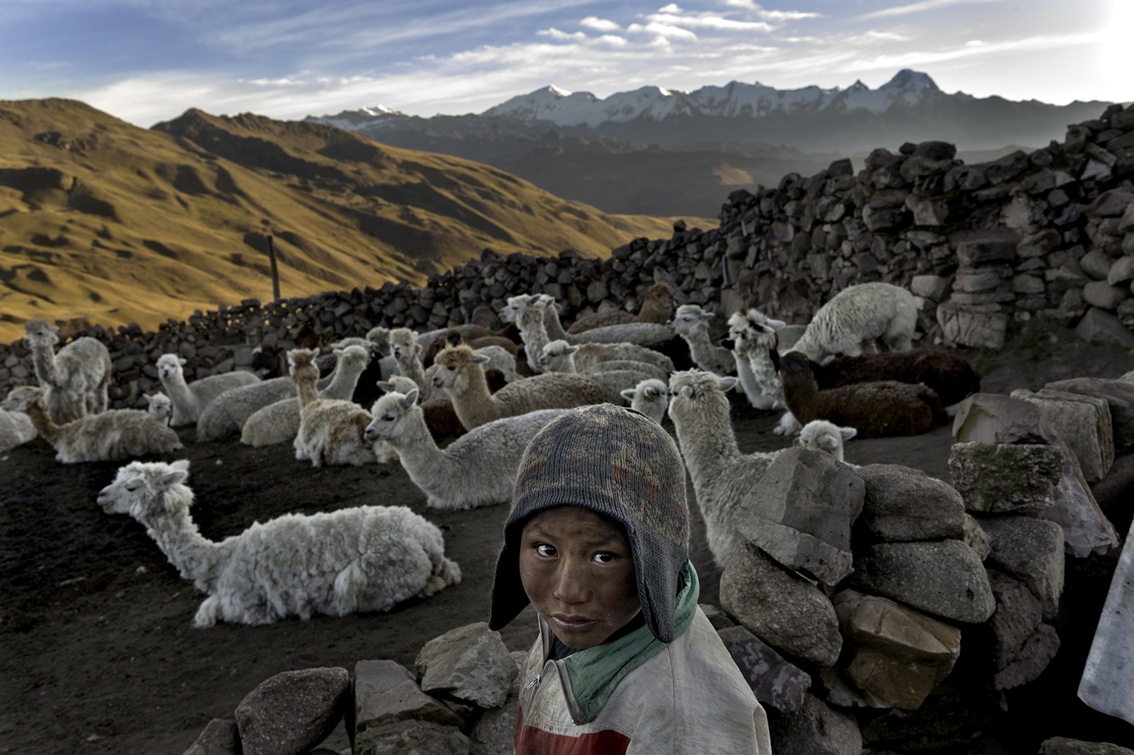 Following the death of his father, Alvaro Kalancha Quispe, 9, helps his family survive by herding. He opens the gate to the stone pen that holds the family's alpacas and llamas each morning so they can graze throughout the hillsides during the day. He then heads off to school, but must round them up again in the evening in the Akamani mountain range of Bolivia in an area called Caluyo, about an hour from the city of Qutapampa. In this part of the world, the highlands of Bolivia, approximately 13,000 feet above sea level, residents live in homes with no insulation, no electricity, and no beds. Their water comes from streams that run off the snow-covered mountains. Their livelihood lies with their animals, for each animal produces about three pounds of fur each year, and each pound of fur is sold for 18 bolivianos, which amounts to about $2.50 U.S. All in all, this family may earn about $200 of income each year from the herd they watch over. ©  Renée C. Byer