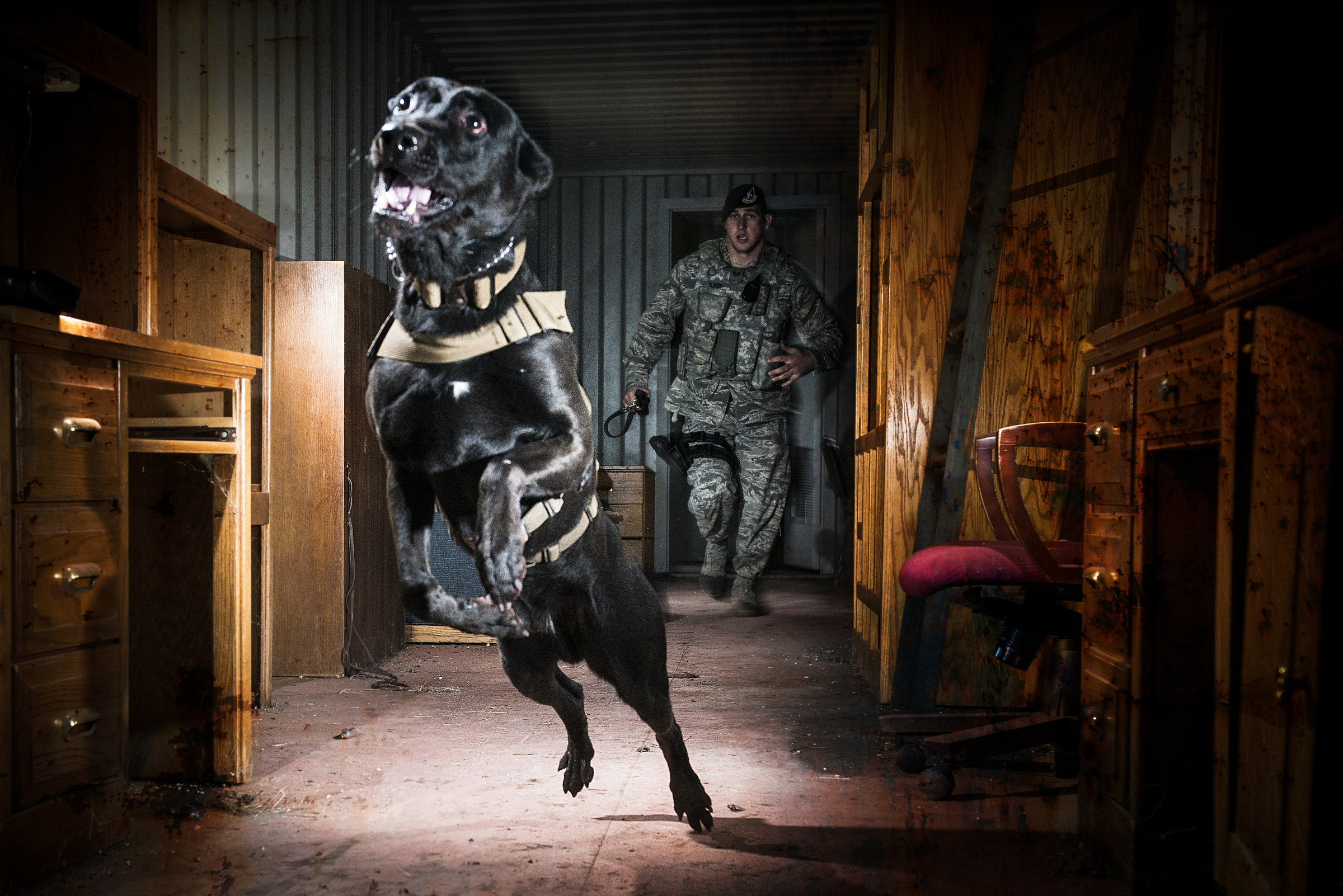 An Air Force Security Forces K-9 handler, and his military working dog, track an armed assailant into a trailer home and prepare to take the perpetrator down by force during clearing a training operation in San Antonio, Texas. 2013 © Stacy L. Pearsall