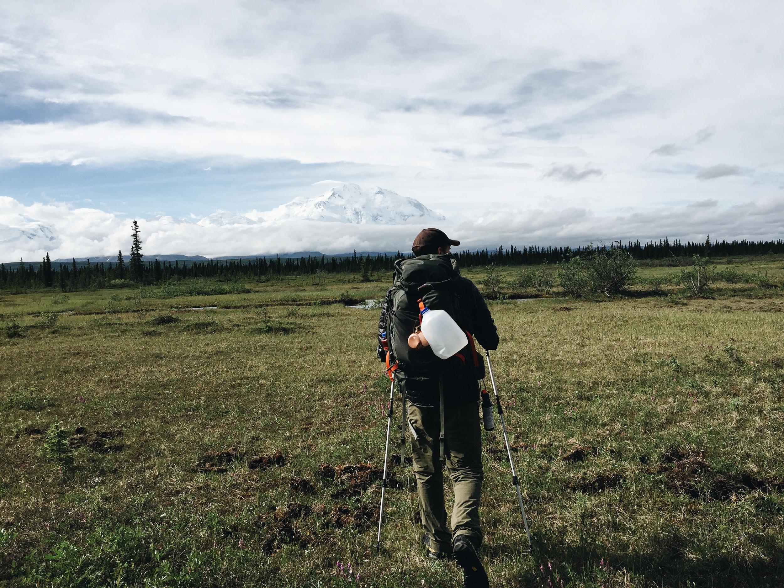 Hiking through Denali National Park on McKinley Bar Trail.