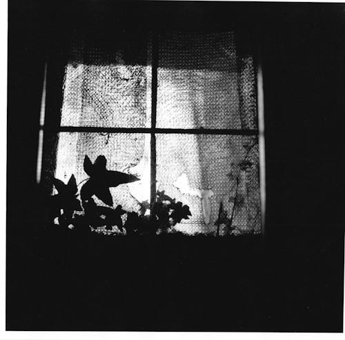 Light-6.jpg