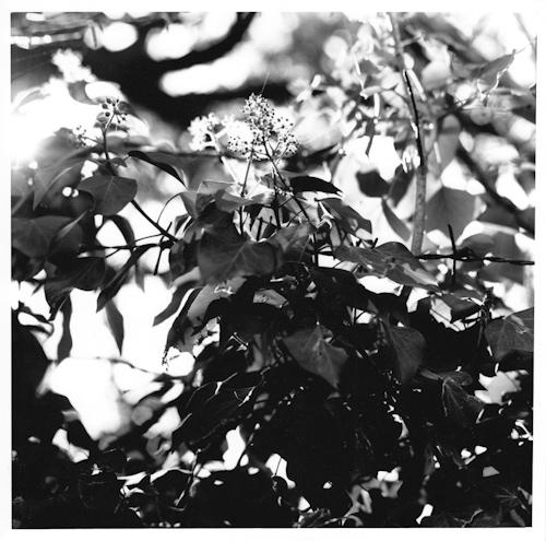 Light-9.jpg