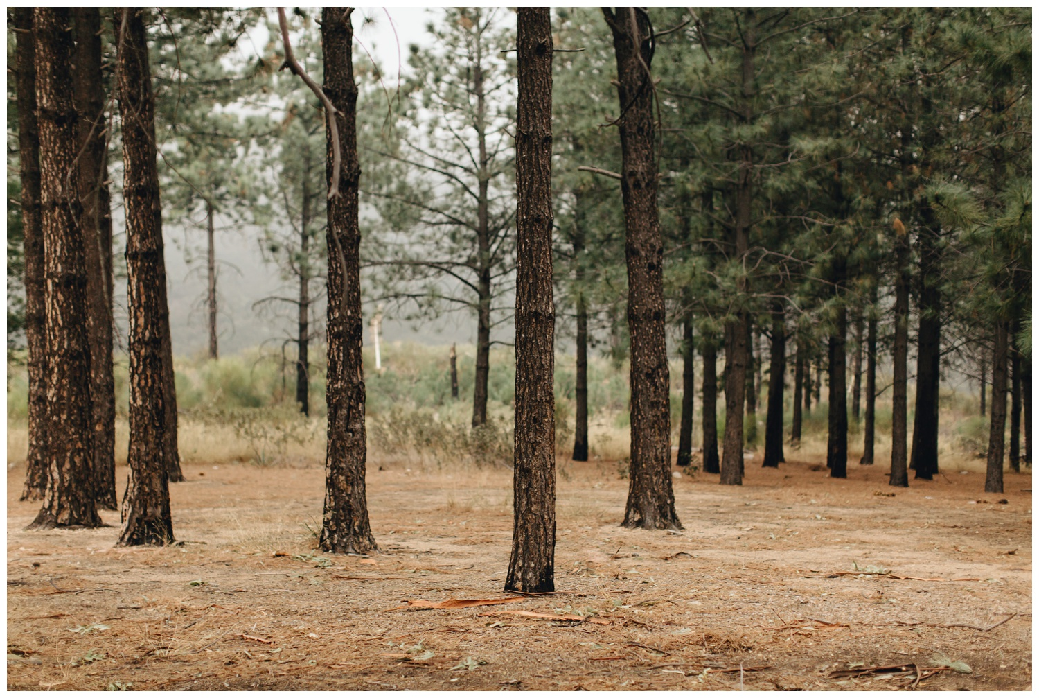 Los Angeles Forest Warm and Artistic Engagement Session-1411.jpg