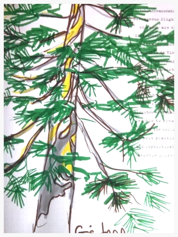 G's Tree , Lake Tahoe Retreat, 2014