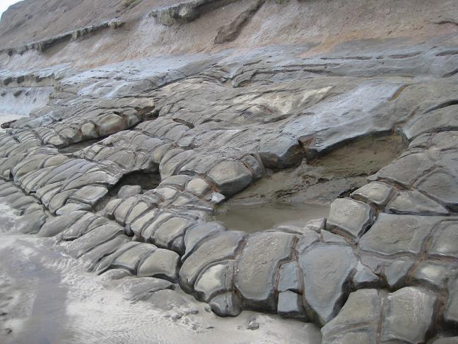 Feb. 2008 - Newport Fossil Fest