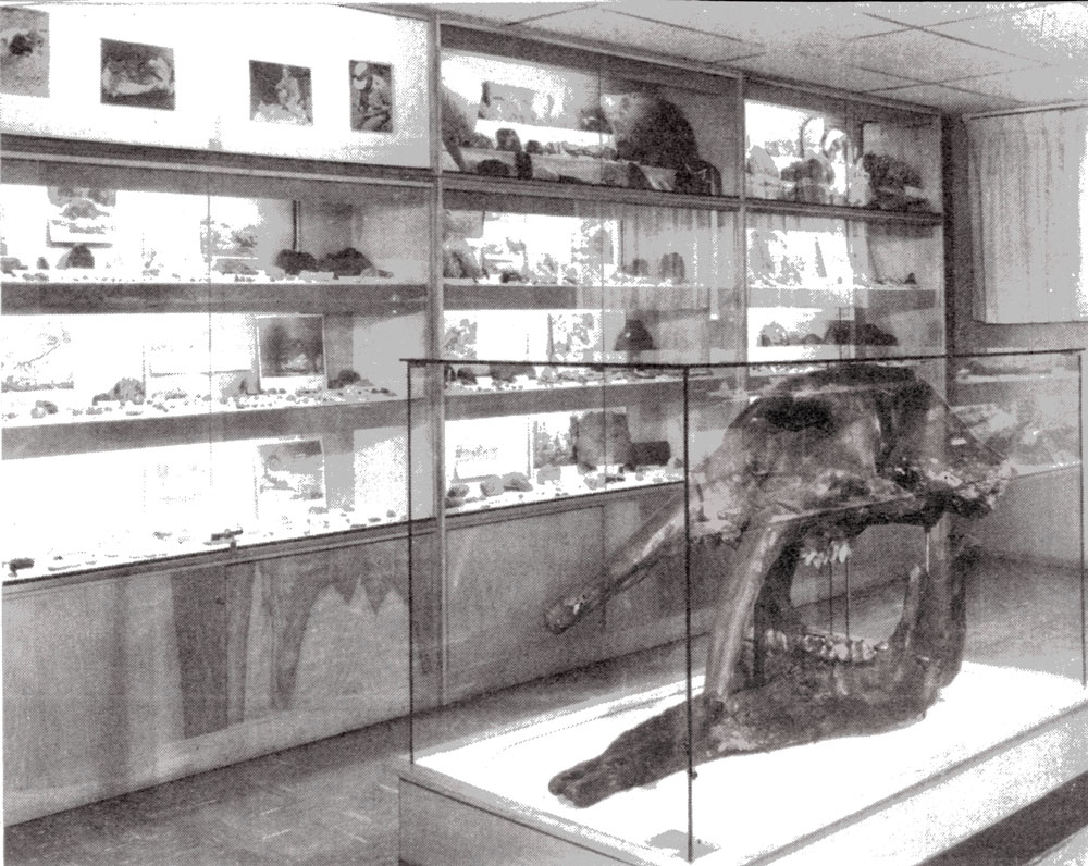 Part of Hancock's fossil collection, as arranged at OMSI by his wife Berrie.   (Photo   courtesy Delano Photographics)
