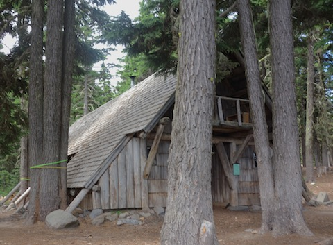 An A-Frame crowded with trees that have grown too big. Some are flagged to be taken out.