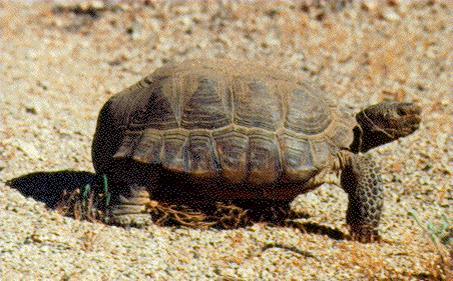 Don't run over the tortoise! Photo by Sheila Alfsen.
