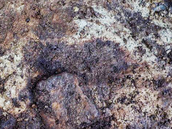 Photograph of a human footprint (center) impressed into a 13,000-year-old paleosol at the Meay Channel I archaeology site on Calvert Island. Source:  Sci News, March 29, 2018.  Image credit: Duncan McLaren.