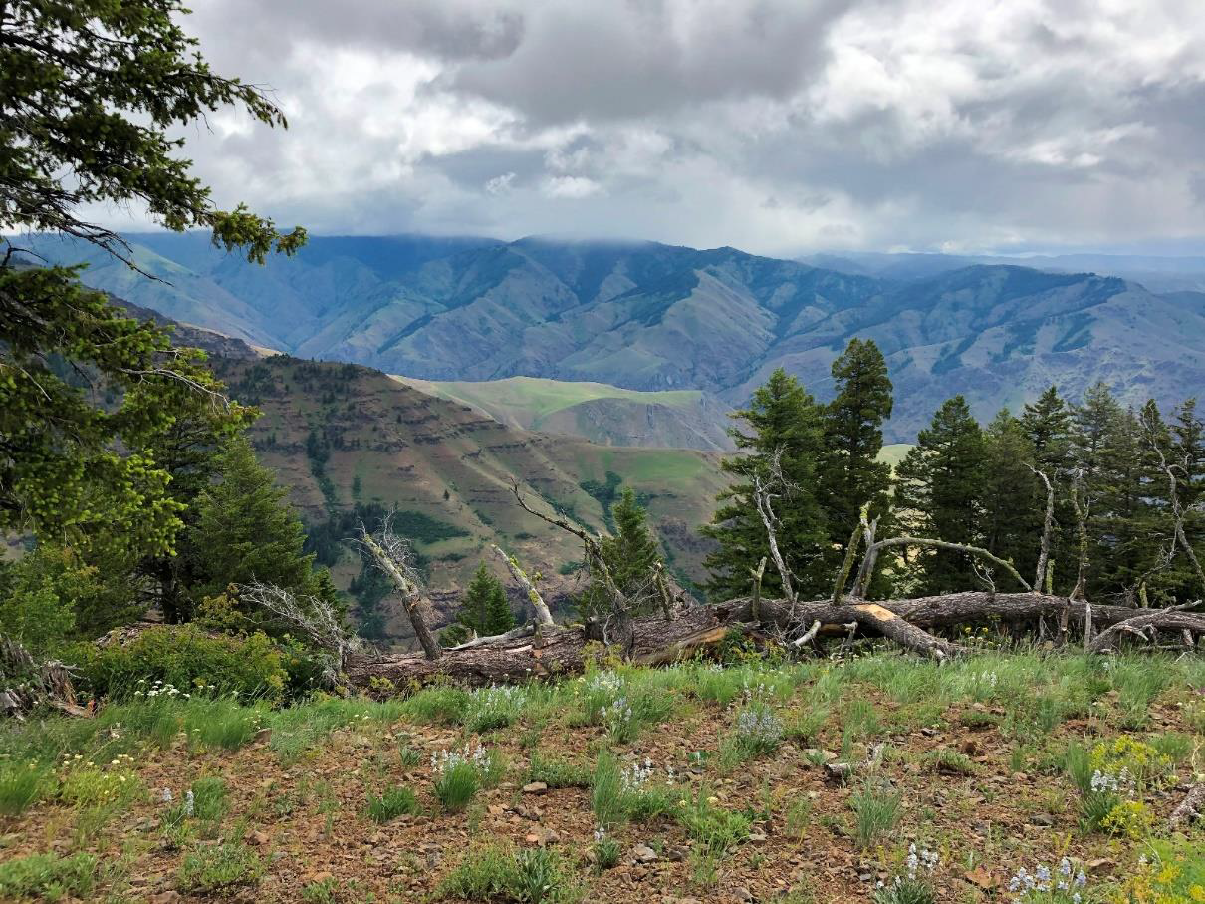 About 40 miles into the drive we stopped at Hells Canyon Overlook. Also a bit of a misnomer, we are looking down a side canyon that terminates in Hells Canyon.