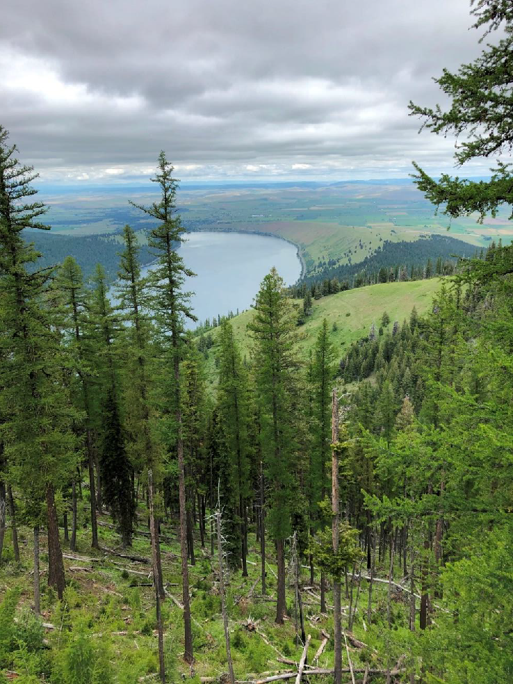 Heading up the Wallawa Lake Tramway, one gets fabulous views of Wallowa lake and the lateral moraines which enclose it like great arms coming from the mountains.