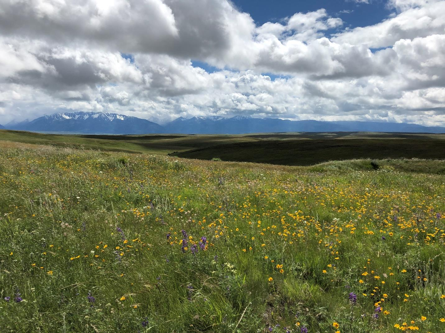 A riot of flowers carpet the Zumwalt Prairie with the Wallowa Mountains as a dramatic backdrop.