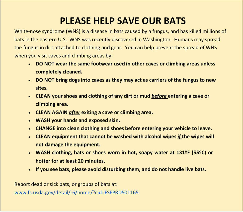 Save Our Bats Instructions