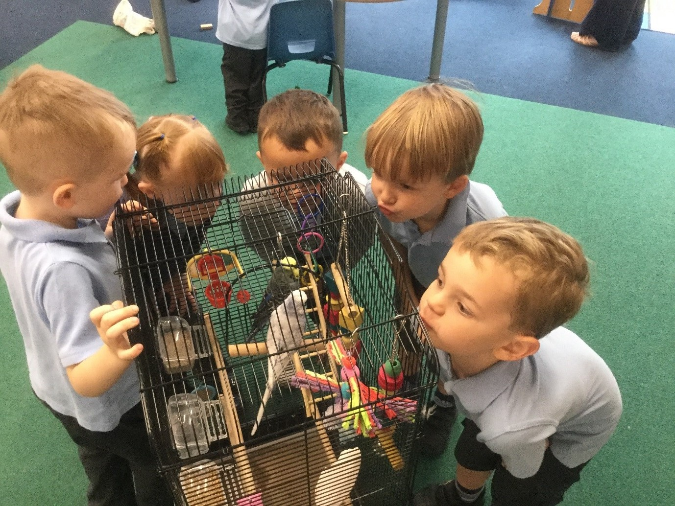 We started this week by welcoming some feathered friends into Nursery. Mrs Gaddes' budgies Ricky and Buddy stayed for the whole week which gave the children the chance to oberve them really carefully. -