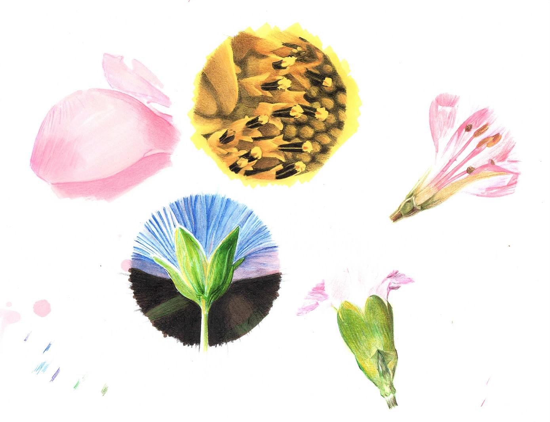 fiore-particolari-disegno-lowres.jpg