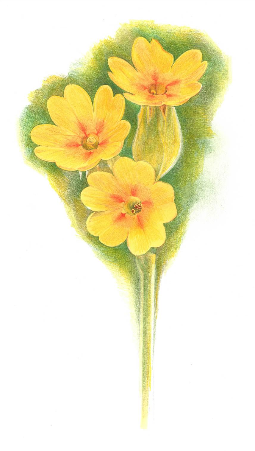 fiore-disegno-lowres.jpg