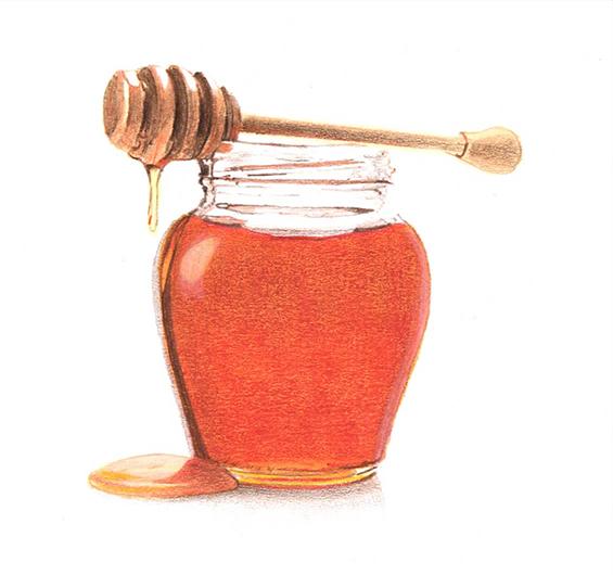 miele-disegno-lowres.jpg