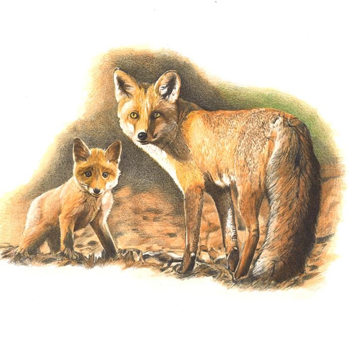 Fuchs / Volpe