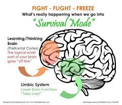FFF brain.jpeg