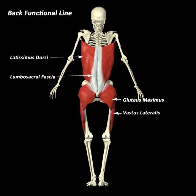 fascia back-functional-line.jpg