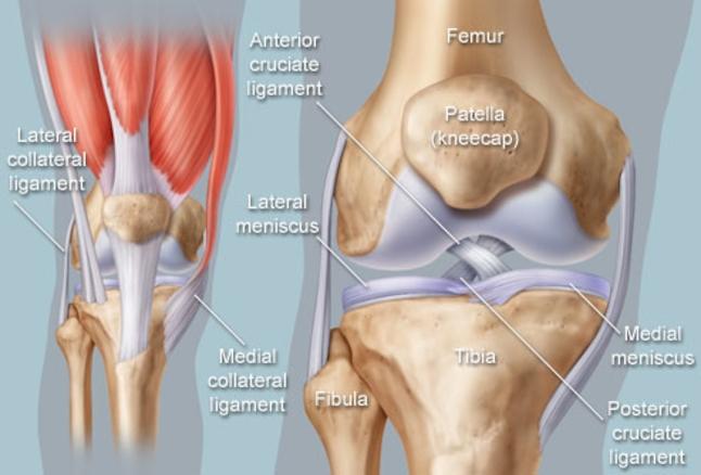 knee joint.jpg