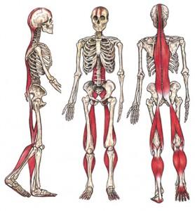 Tom Myers 'Anatomy Trains' Book