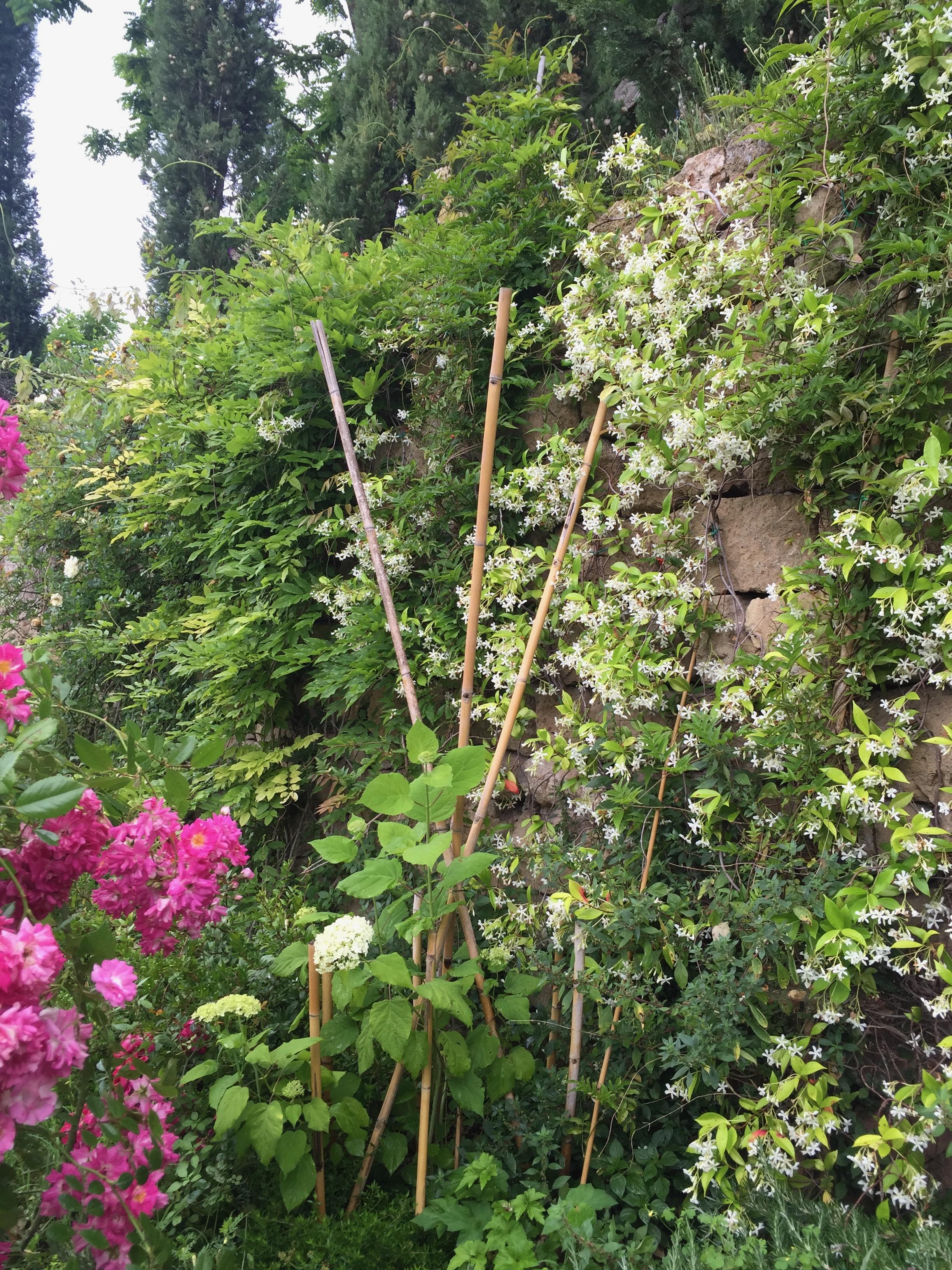 Garden Venetia - 1 of 38 (5).jpg