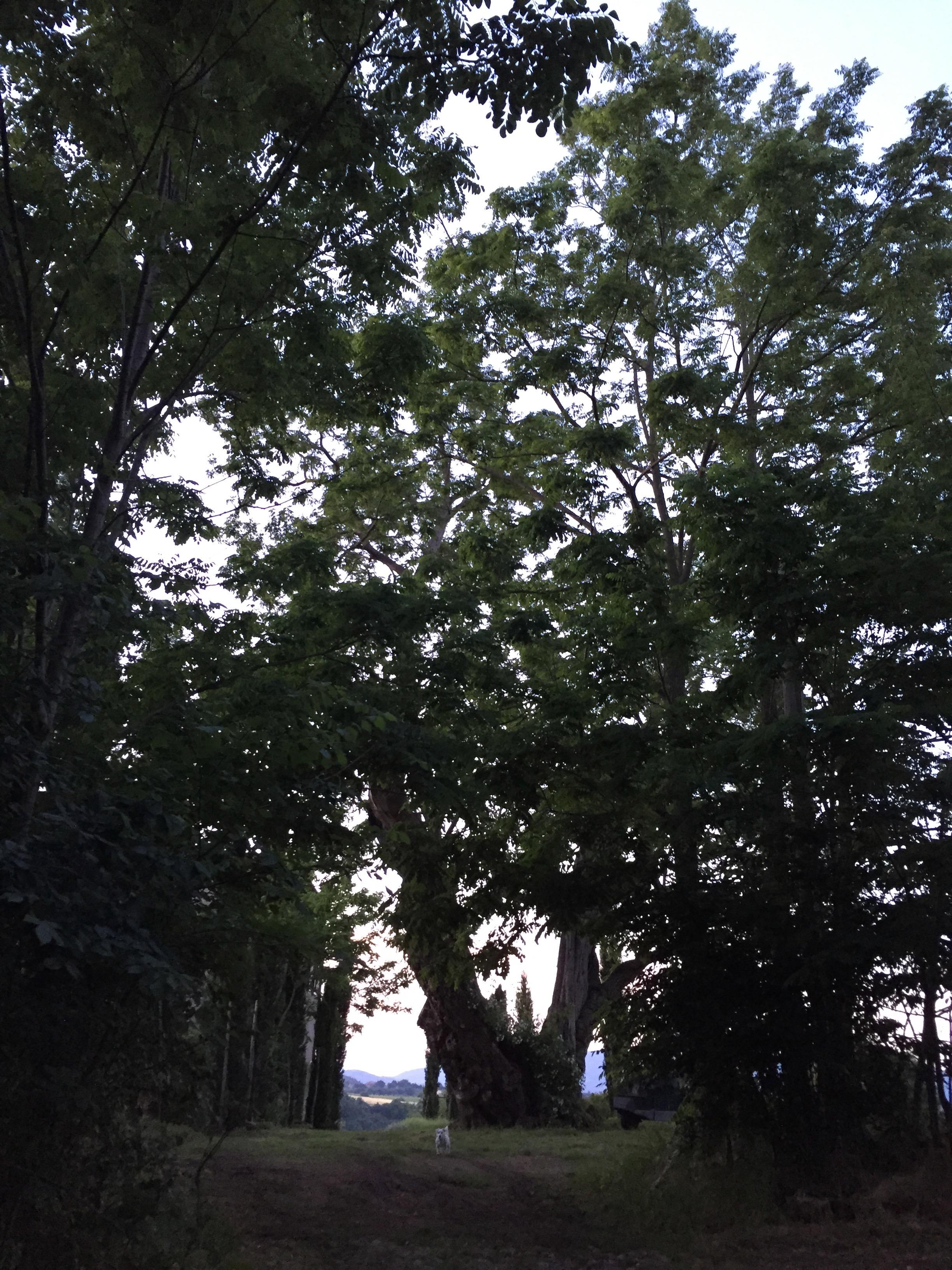 Garden Venetia - 1 of 38 (7).jpg