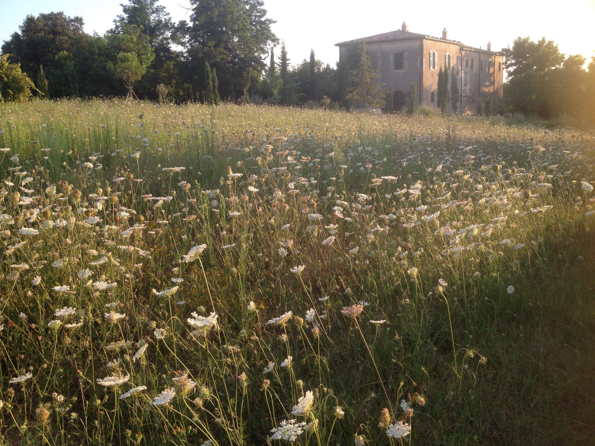 Garden Venetia - 1 of 38 (19).jpg