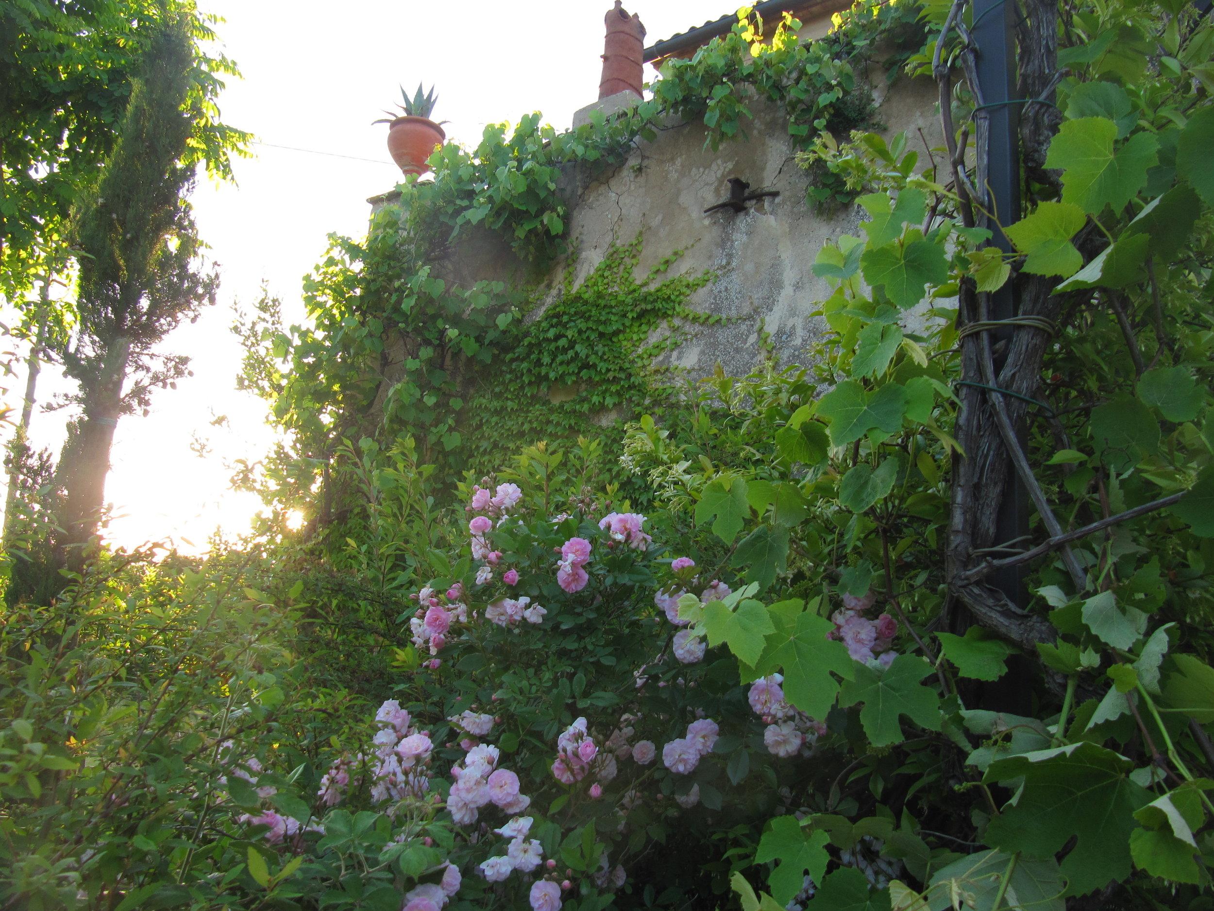 Garden Venetia - 1 of 38 (34).jpg