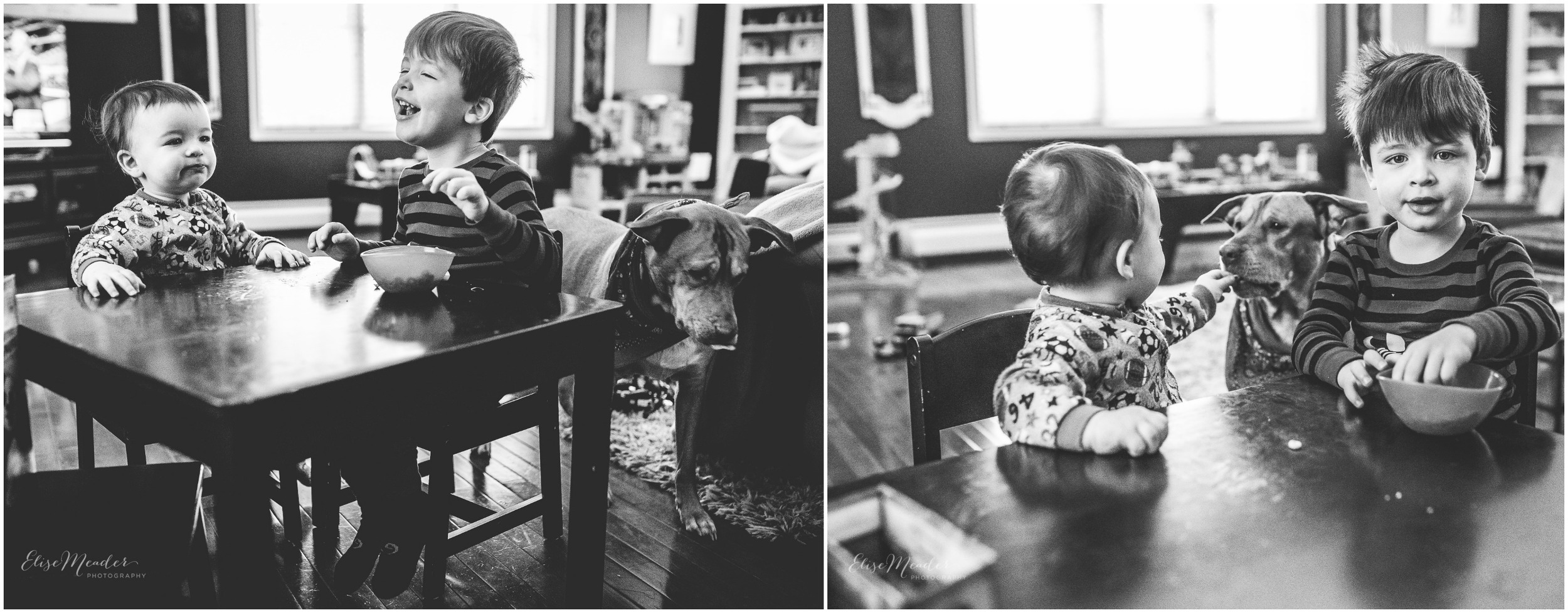 a little storytelling.. which was the theme at M4Hens project 52 this week. Kahlua is always trying to score some treats. She succeeds most of the times with these little dudes.