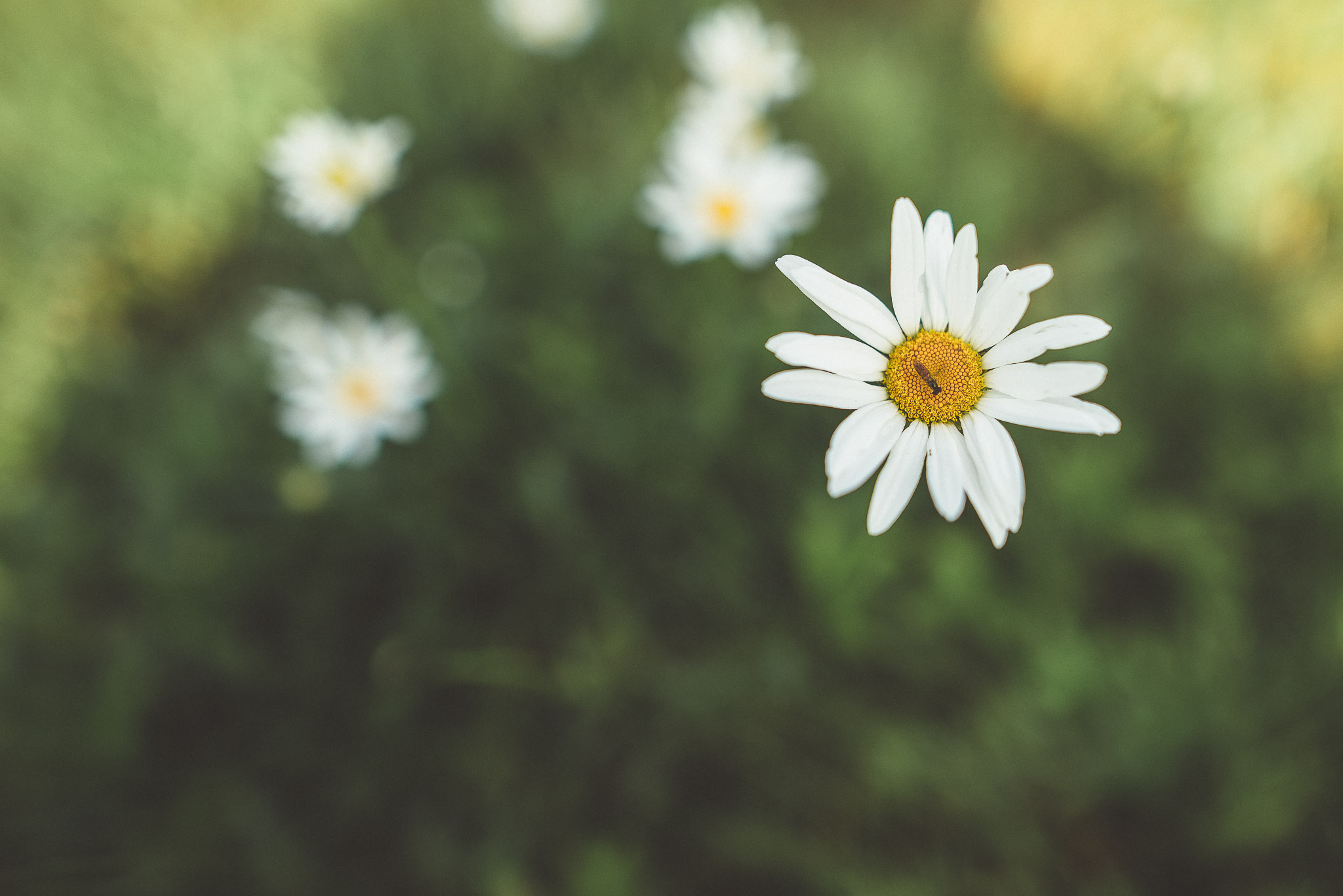 weeds-7.jpg