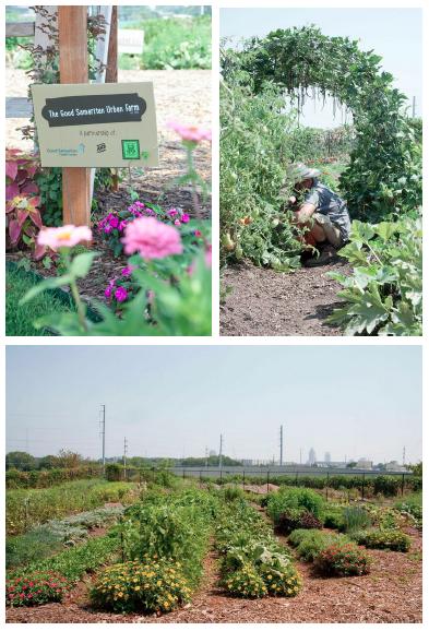The Good Samaritan Urban Farm  Photos By  Christina Wedge