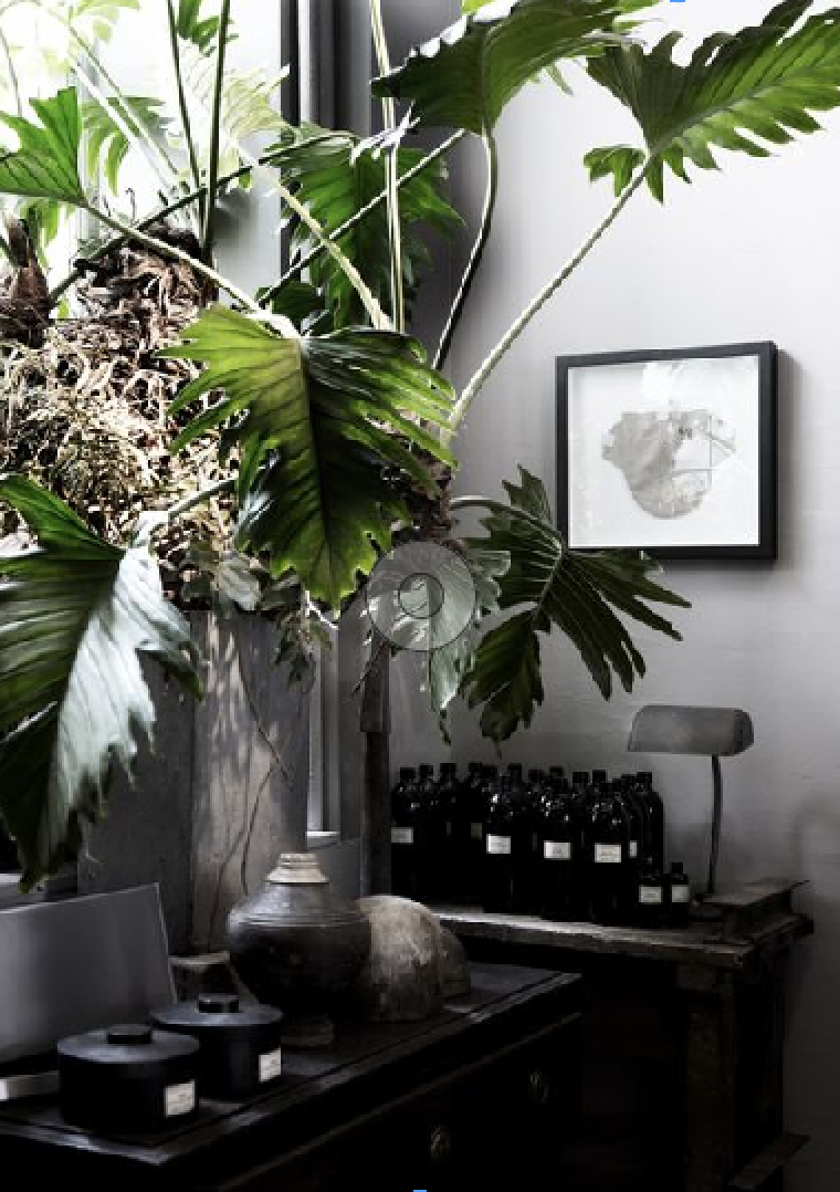 Scared to go big?  Start off small, bring in some natural elements to introduce olive green in your home.   via