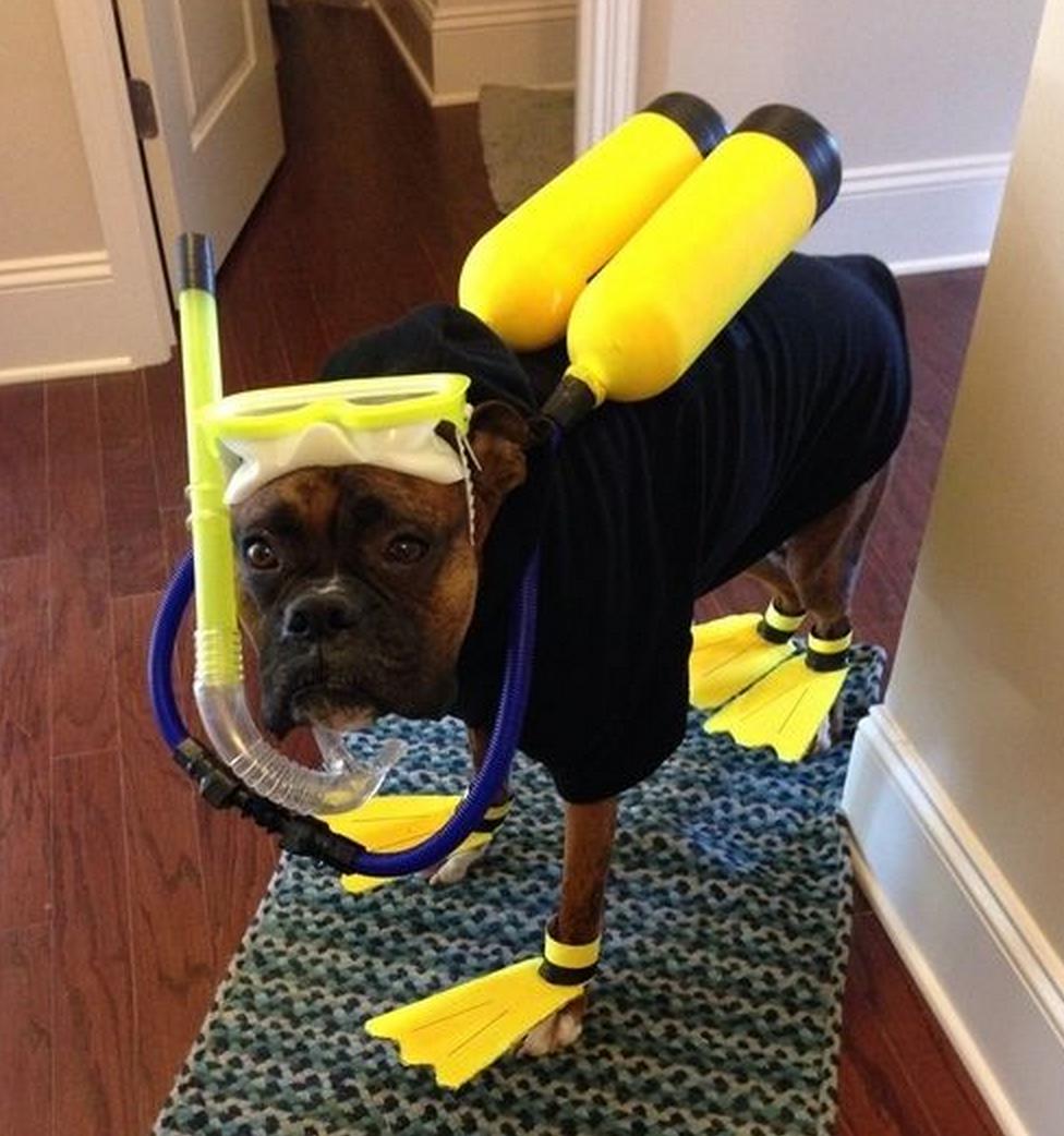 A scuba dog!