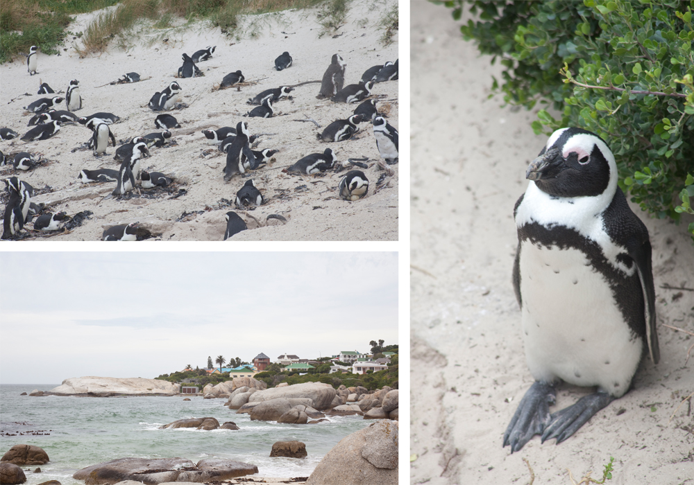 Robben Island, photos by Christina Wedge