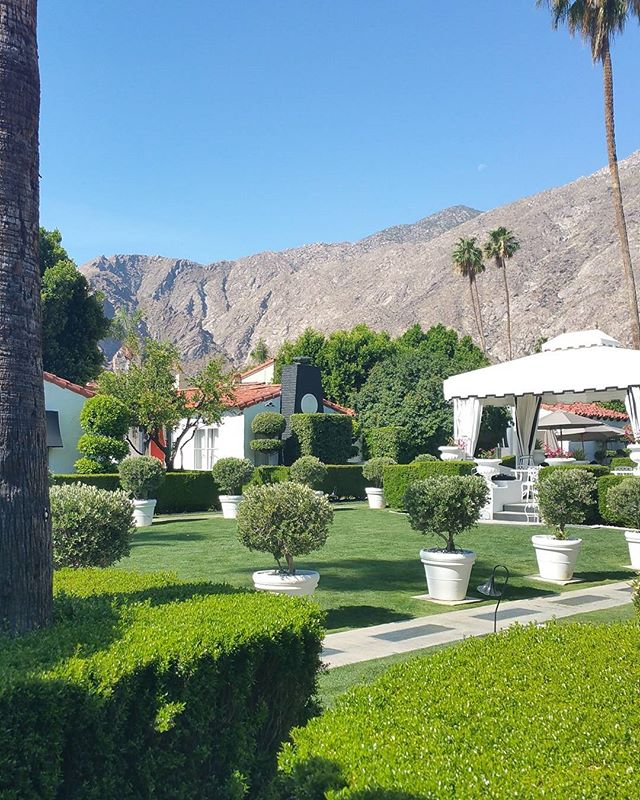 Not a bad view from our place in Palm Springs! . . . 📷@susiemaedesign #susiemaedesign #design #interiors #interiordesign #palmsprings #california #travel #explore #architecture #mcm #glam #inspiration