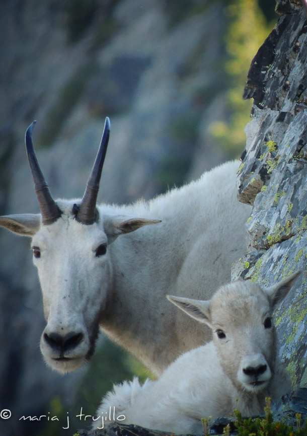 webcopy-left-wildlife (9 of 14).jpg