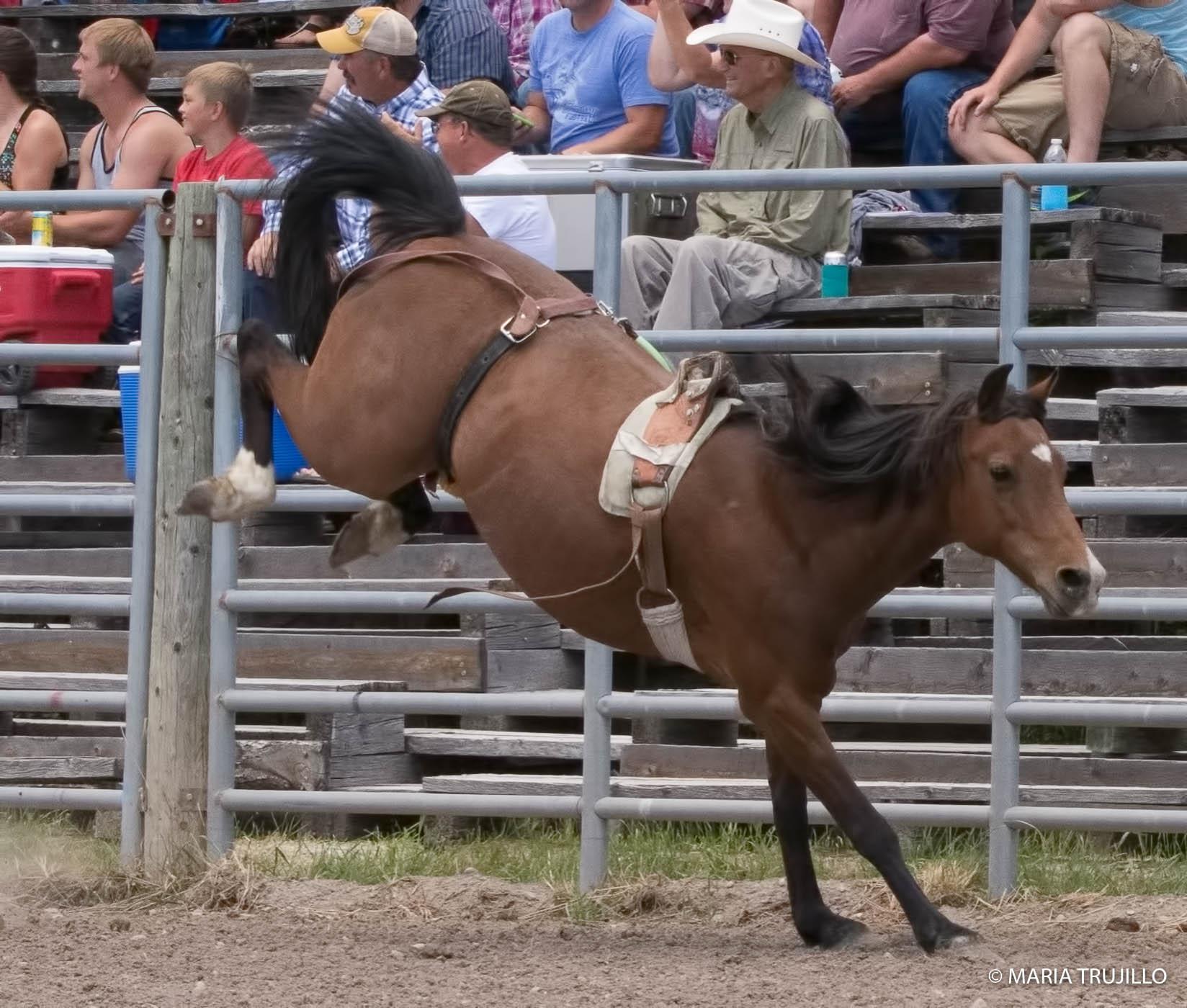 augusta rodeo 2016-28.jpg