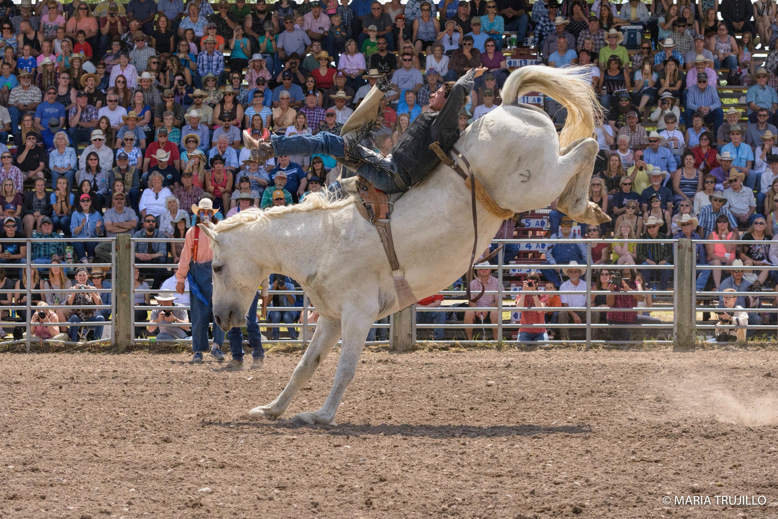 augusta rodeo 2016-43.jpg