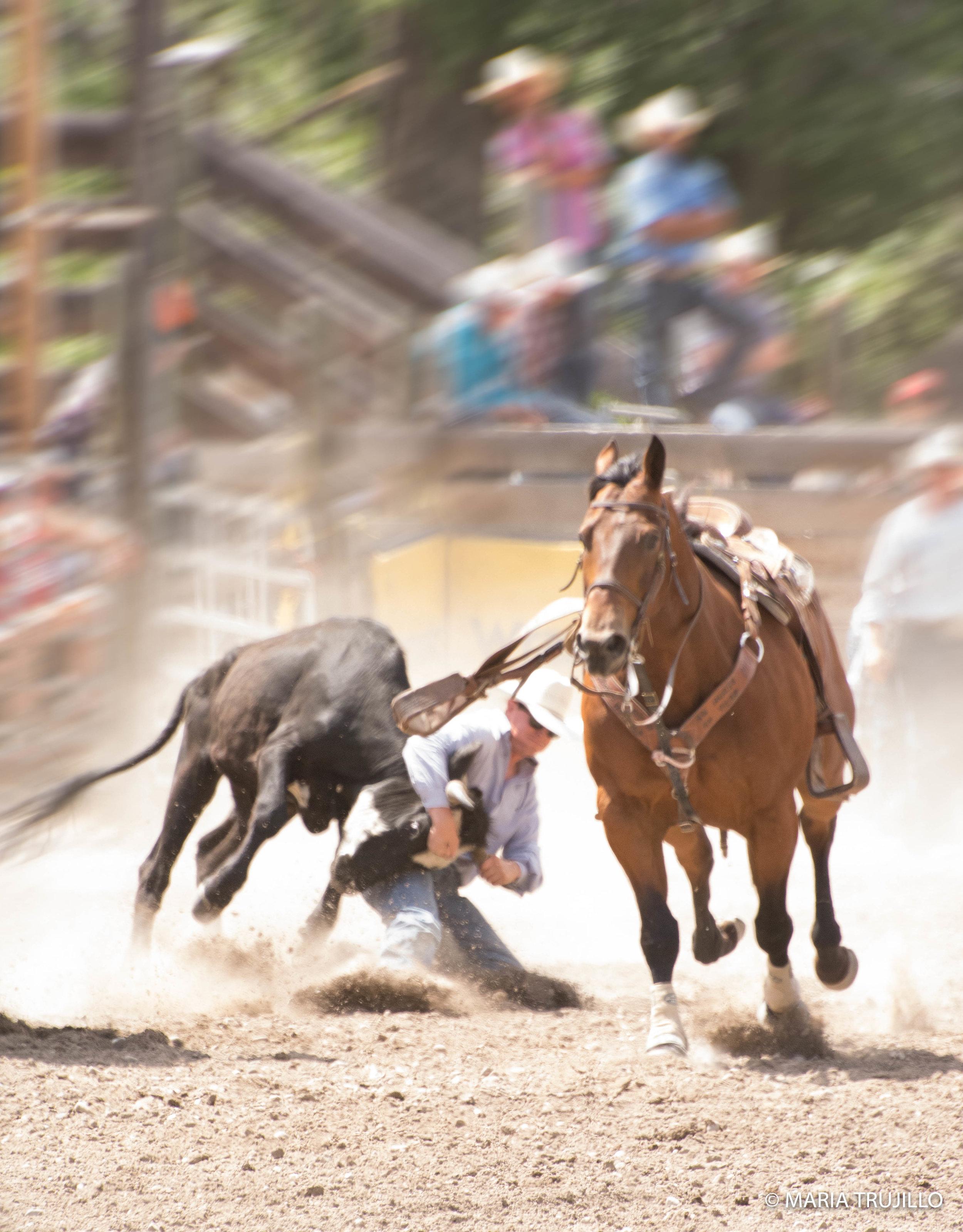 augusta rodeo 2016-49.jpg