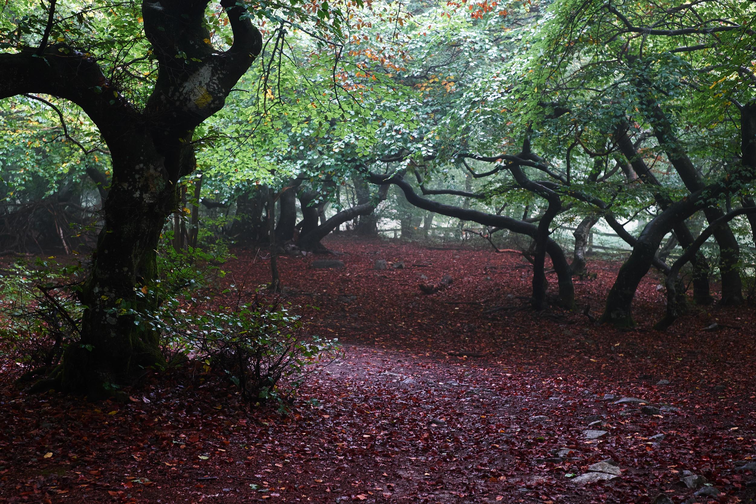 Lite maffig skog igen, kan man inte få för mycket av. Dimman i luften gjorde att färgskalan blev kallare, trevlig upptäckt!