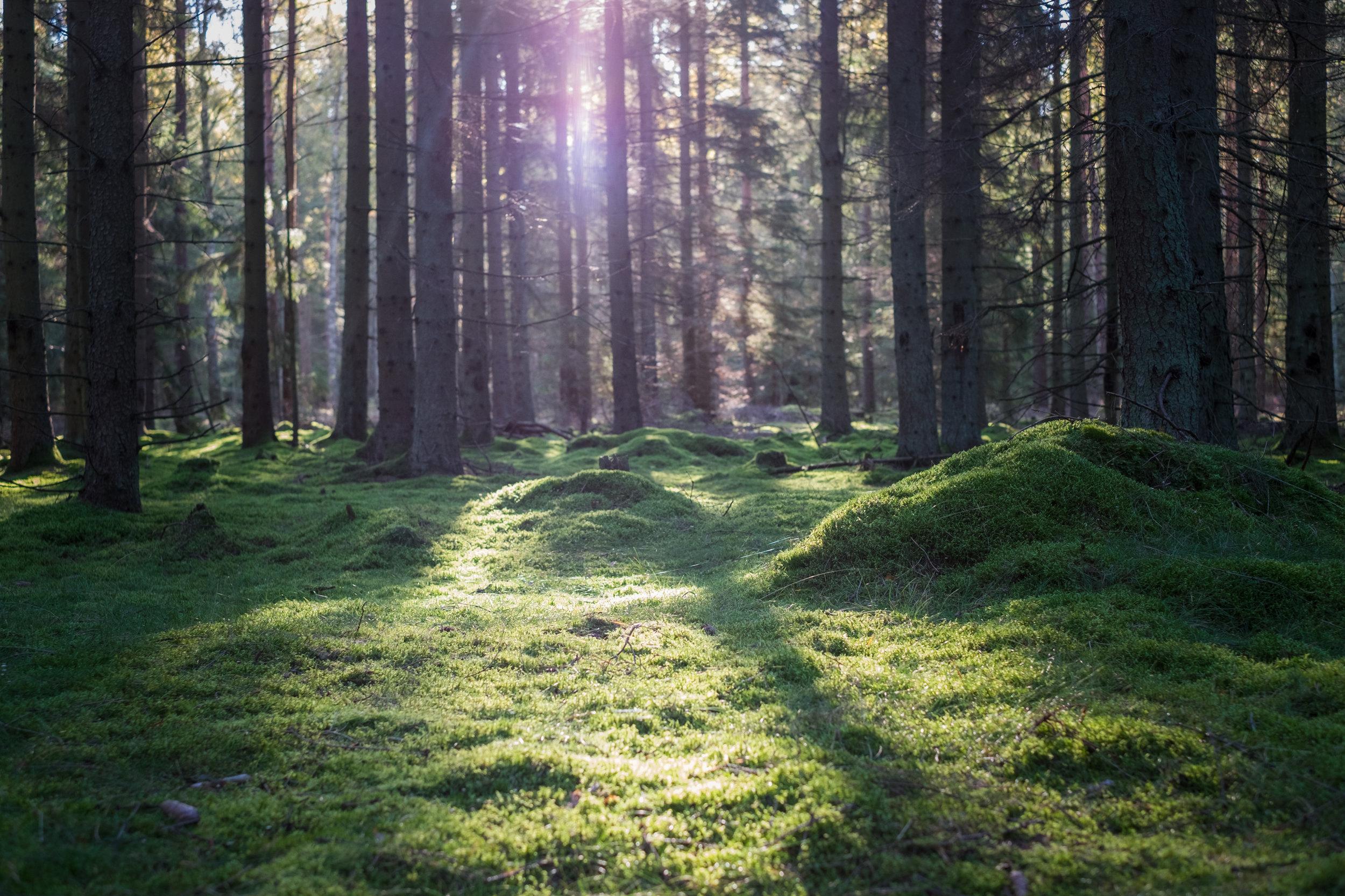 Det är något märkligt magiskt med solstrålar och grön mossa. Tröttnar aldrig