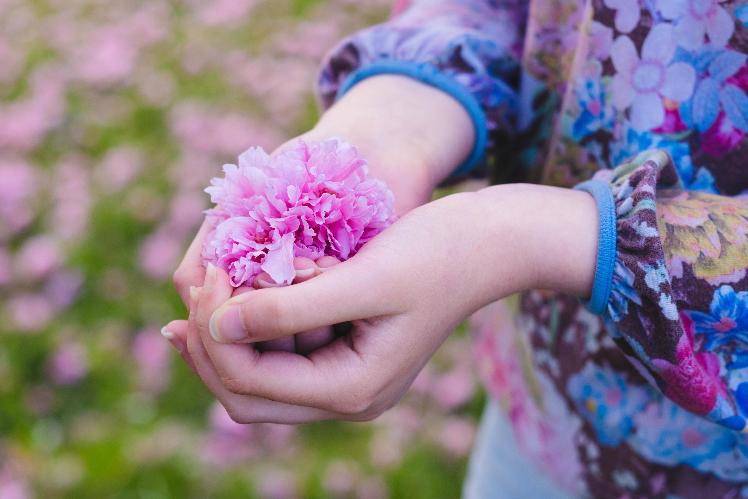 sköra vackra blomblad