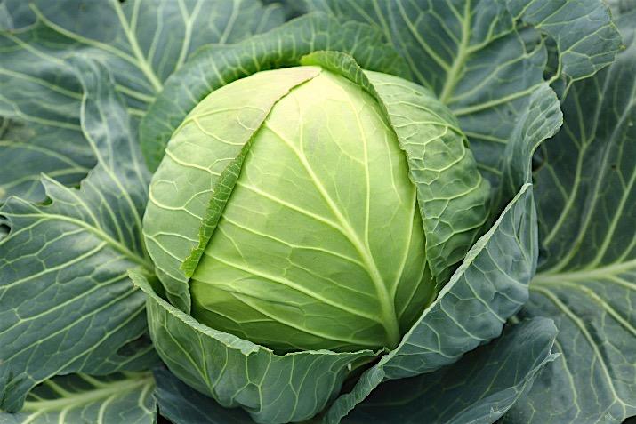 Cabbage2_0.jpg